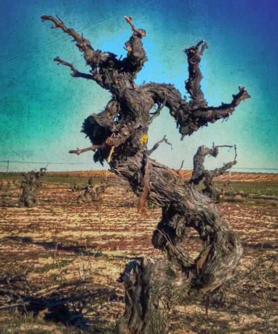 Feria del Vino en el Parador de San Marcos